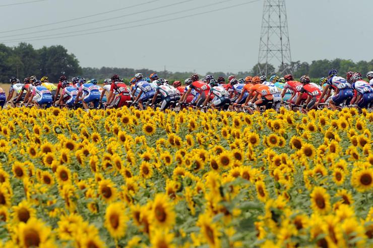 Tour_2010_st_6_sunflowers